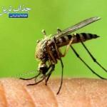 اقداماتی برای جلوگیری از بیماری زیکا