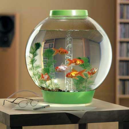 مدل تنگ ماهی عید نوروز