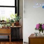 نگهداری گیاه کاکتوس در آپارتمان