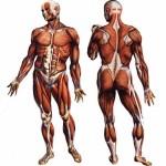 دلیل رشد عضلات پس از تمرین