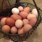نکات نگهداری تخم مرغ