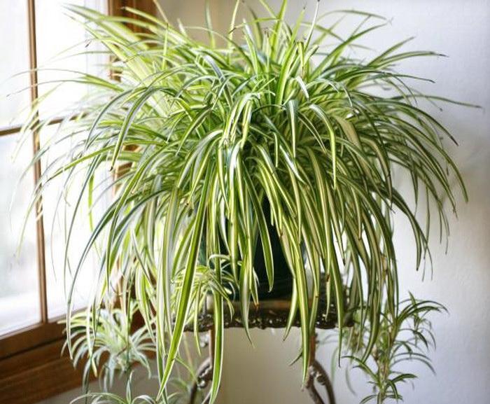 روش نگهداری از گیاه گندمی