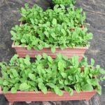 روش کاشت گیاه در خانه