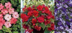 گل های زیبای مناسب فصل تابستان